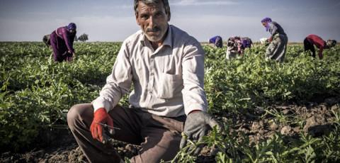 Seasonal Agricultural Workers
